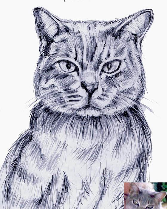 realistic cat 2